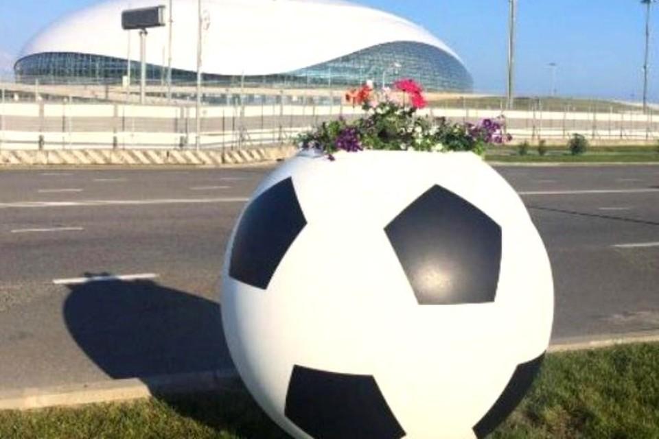 Клумбы расположились вдоль дорог в Олимпийском парке. Фото: администрации Сочи.