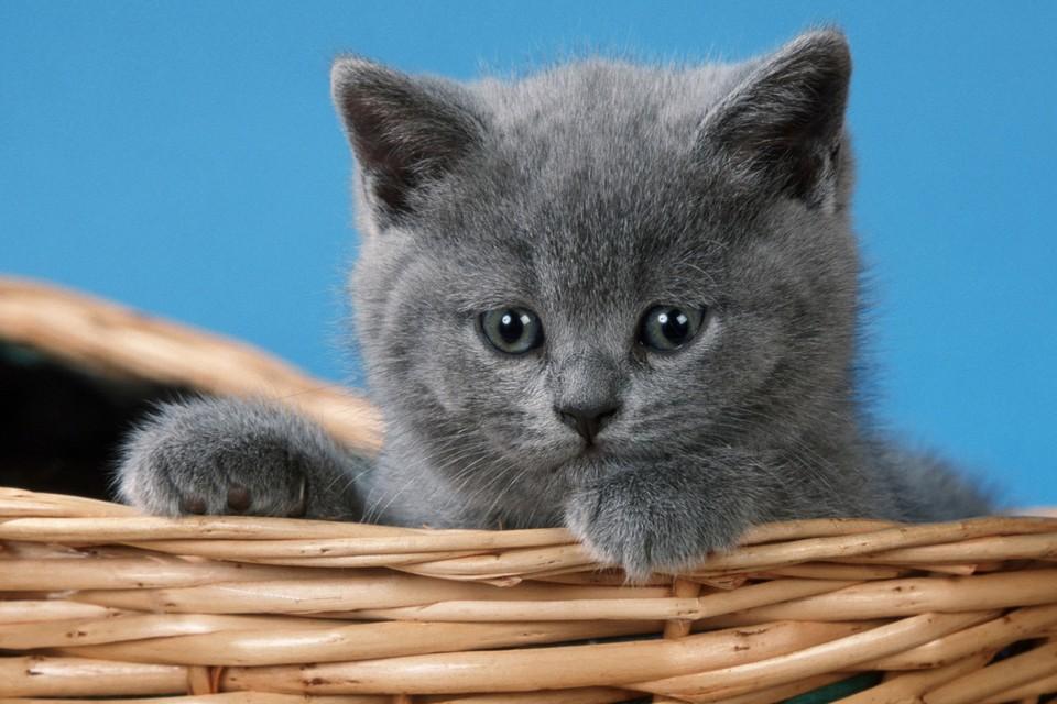 Со слов владельца питона, его любимец предпочитает котят хомякам.
