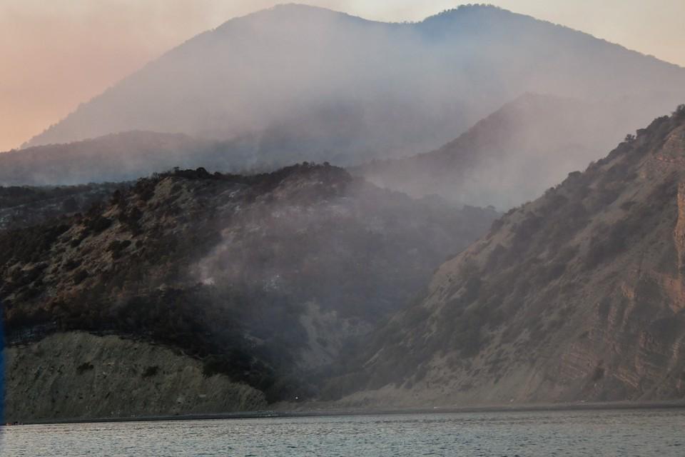 Названа причина большого пожара в заповеднике «Утриш».