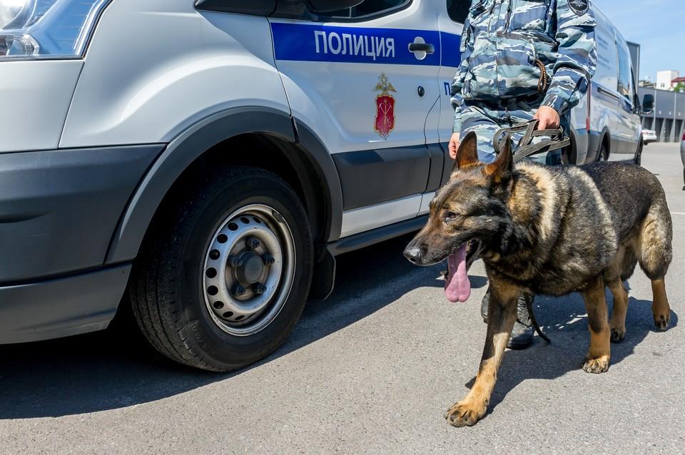 Служебная собака спасла от изнасилования школьницу из Ломоносова.