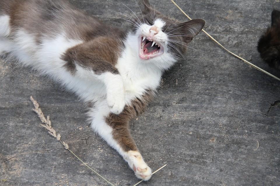 Кошек из квартиры посадили в мешок и увезли в неизвестном направлении.
