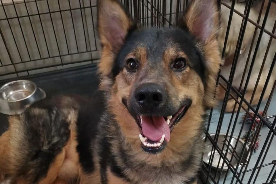 """Мухтар - очень жизнерадостный пес. Фото: предоставлено фондом """"Собака счастья"""""""
