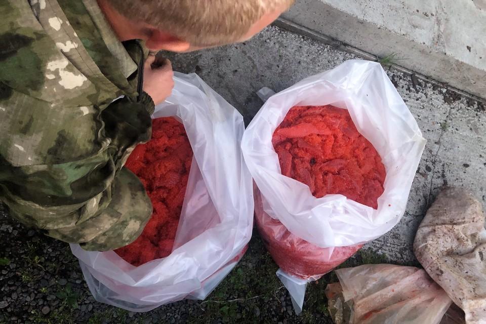 Ущерб от незаконной добычи рыбы и заготовки икры предварительно оценили в 2,5 млн рублей