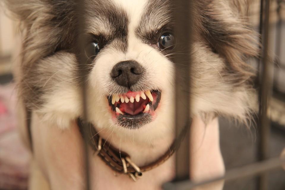 В регионе выявлены случаи бешенства собак.