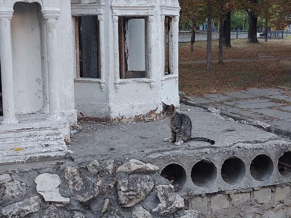 Котенок у макета церкви