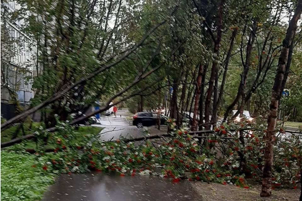 На улице Морской ветер повалил деревья. Фото: Игорь Юрьев