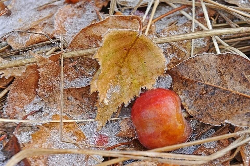 Первые заморозки придут в Волгоградскую область уже в начале рабочей недели.