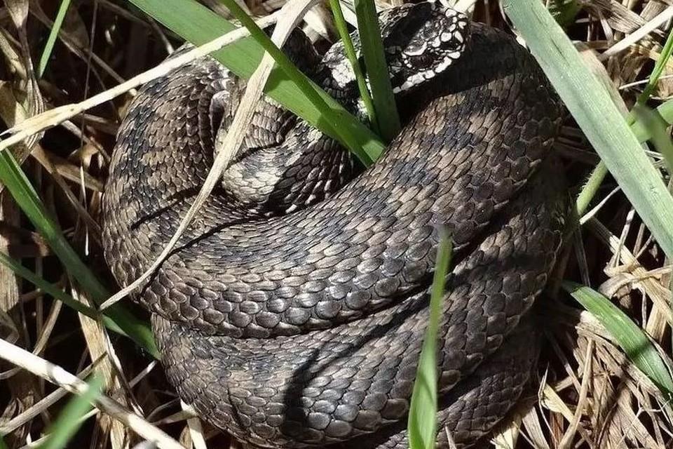 Люди говорят, что находят змей и на своих участках