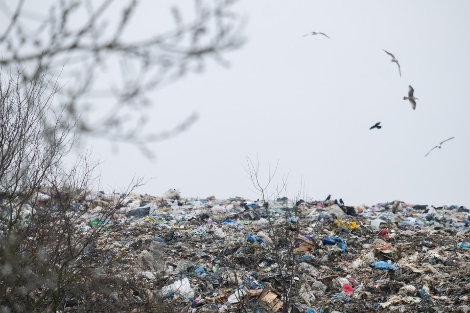 Три несанкционированные свалки на севере Петербурга ликвидируют до ноября