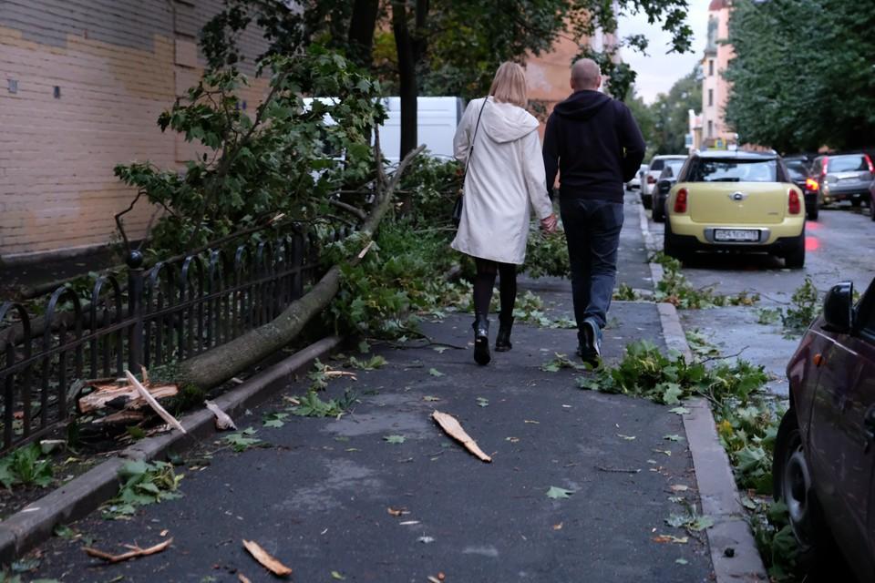 МЧС объявило штормовое предупреждение в Ленобласти 8 сентября