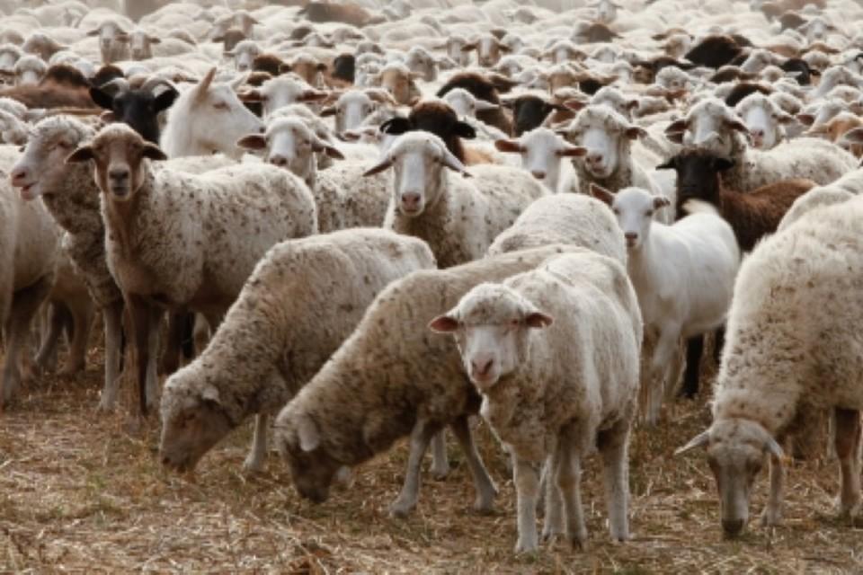 Ростовские пограничники пресекли контрабанду более 7 тысяч животных
