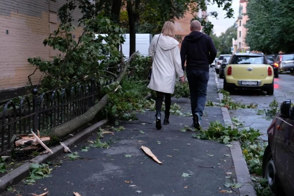 МЧС сообщило о грядущем штормовой ветре вечером 8 сентября в Петербурге.