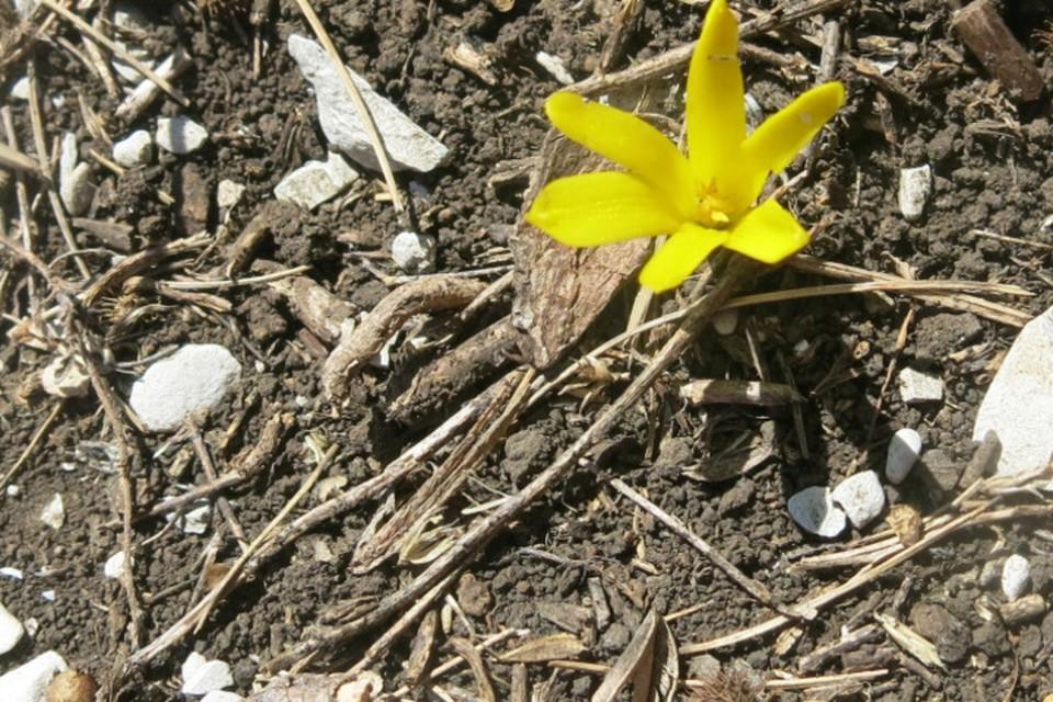 Редкий цветок. Фото:www.rgo.ru
