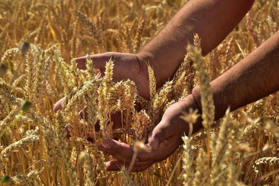 Зарплата в секторе сельского хозяйства значительно ниже среднего по Казахстану