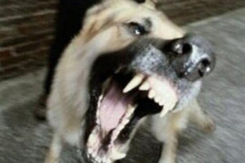 Собака покусала мужчину в Сочи
