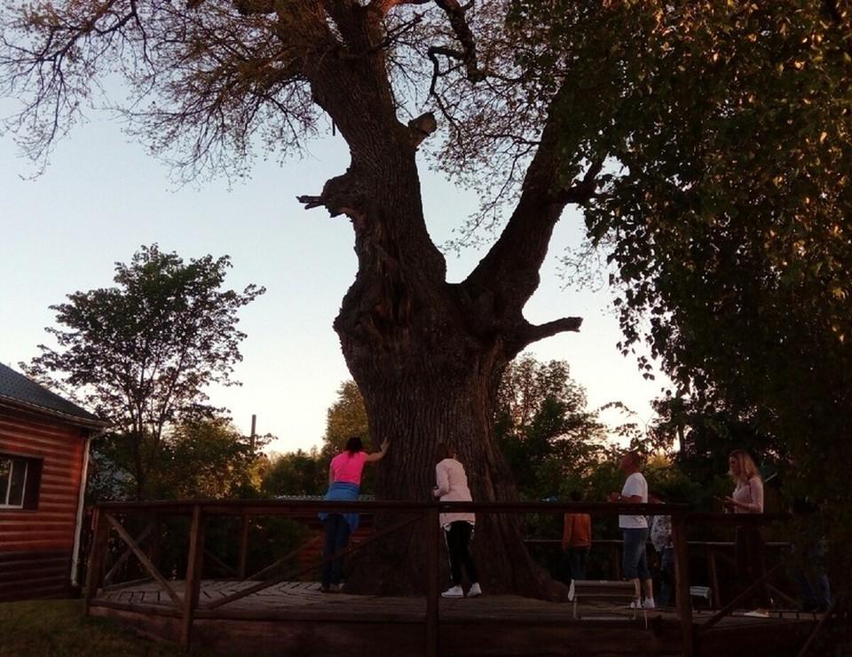 Гостям расскажут о жизни леса