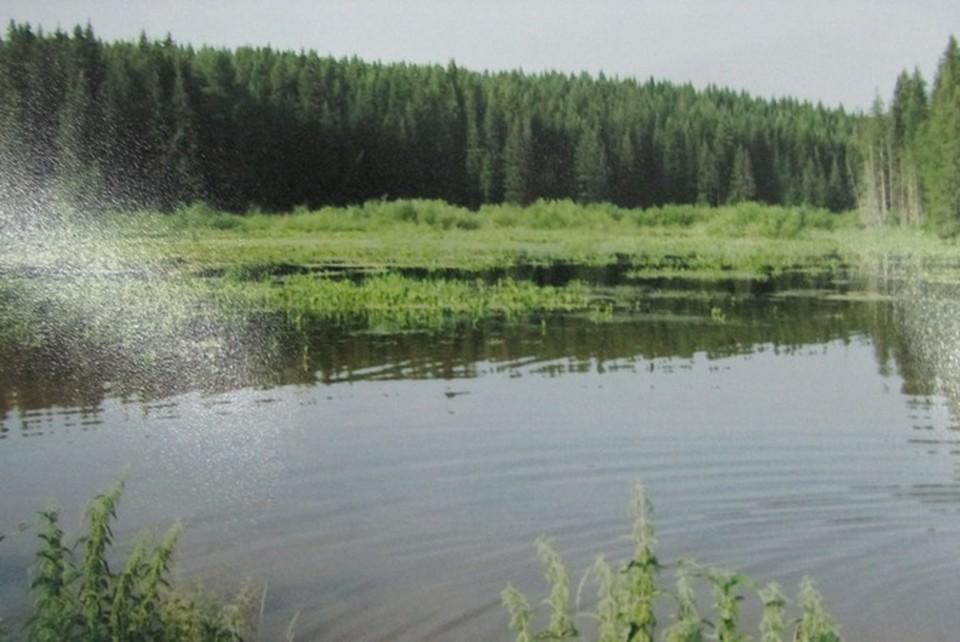 Житель Удмуртии взял в аренду пруд за 130 рублей в месяц.